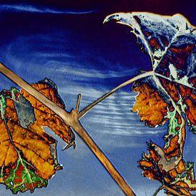 Herfst - Laatste gloed van Christine Nöhmeier