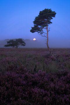 Volle maan in de mist vlak voor zonsopkomst op de Bussumerheide van Michiel Dros