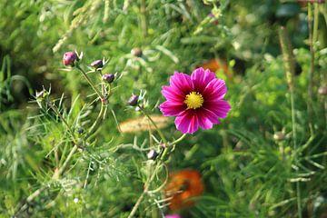 natürliche farben von Alexandra Joseph Reisefotos und Landschaftsbilder