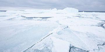 IJsschotsen bij Antarctica sur Sietske Ebus-Mulders