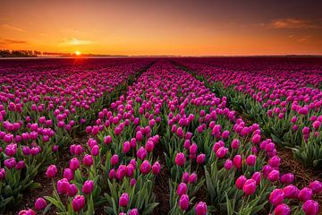Paarse tulpen en een schitterende zonsopkomst van Jenco van Zalk