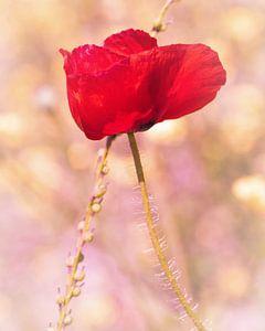 Poppy! von Arjanne Gols