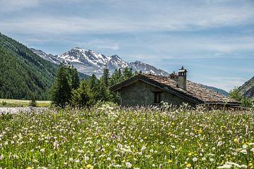 Alpenwiese in Frankreich von Martine Dignef
