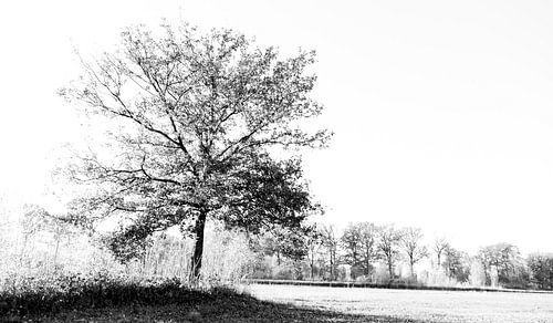 Black tree van Sense Photography