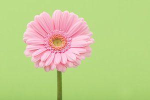 Roze in het groen