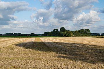 Zon in de polder van Anne Hana