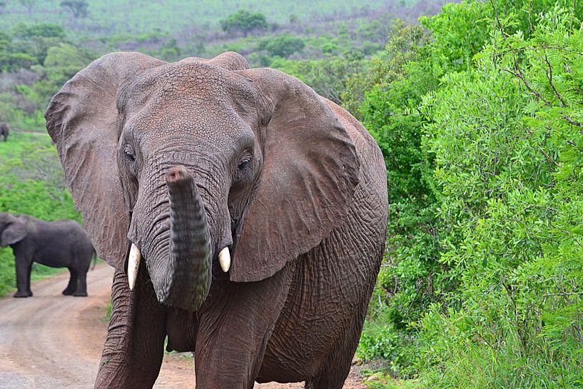 Elefant im Hluhluwe-Imfolozi-Wildreservat von JTravel