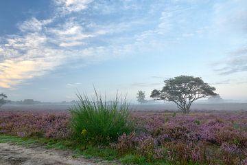 Zonsopkomst op de bloeiende paarse hei van Ad Jekel