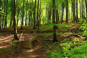 Rügens Wälder van Ostsee Bilder