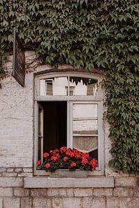 Blumenfenster, Durbuy von Kelsey van Holt