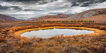 Tundralandschaft im Yukon im Herbst von Chris Stenger