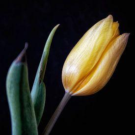 Stillleben mit einer gelben Tulpe. von Tilly Meijer