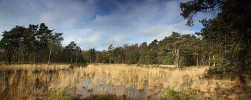 Panorama Formerhoek van