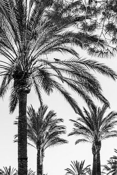 Palmengarten von Uwe Merkel