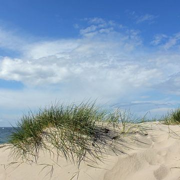 Dünen im Mai van Ostsee Bilder