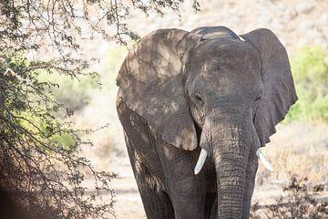 Olifant in de woestijn van Namibië, Afrika van Teun Janssen