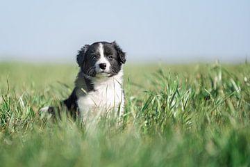 Friesischer Welpe im hohen Gras. von Mariëtte Plat