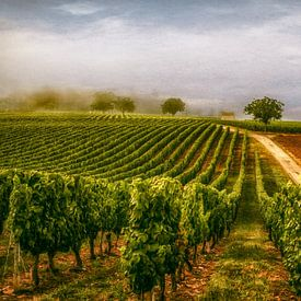 Wijnveld von Lars van de Goor