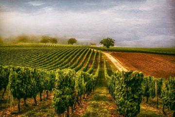 Wijnveld van Lars van de Goor