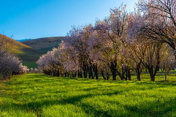 Sonnenlicht auf bunten Blüten von saeid foruzandeh