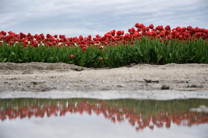Reflectie van Marieke de Jong