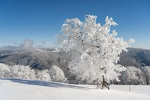 Winter im Schwarzwald von Michael Valjak