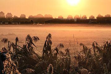 Lever du soleil_04 sur Johan Honders