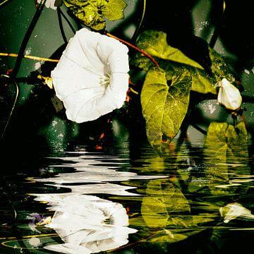 Bloemenwater - Hekwortelwinde van Christine Nöhmeier