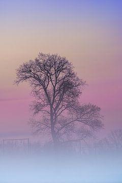 Morgennebel hängt in der Morgendämmerung über dem Grasland