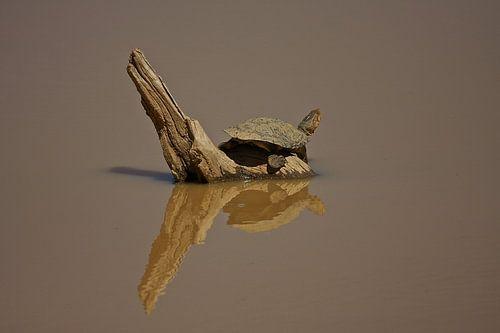 Addo Elephant Park, Schildpad, Zuid Afrika van Ruud Lobbes