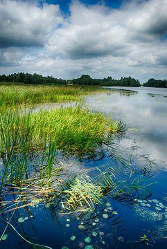 Beeld vanuit natuurontwikkeling Millingerwaard van Waterpieper Fotografie