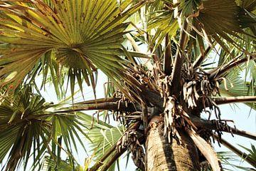 Palmblad van Marije Zwart