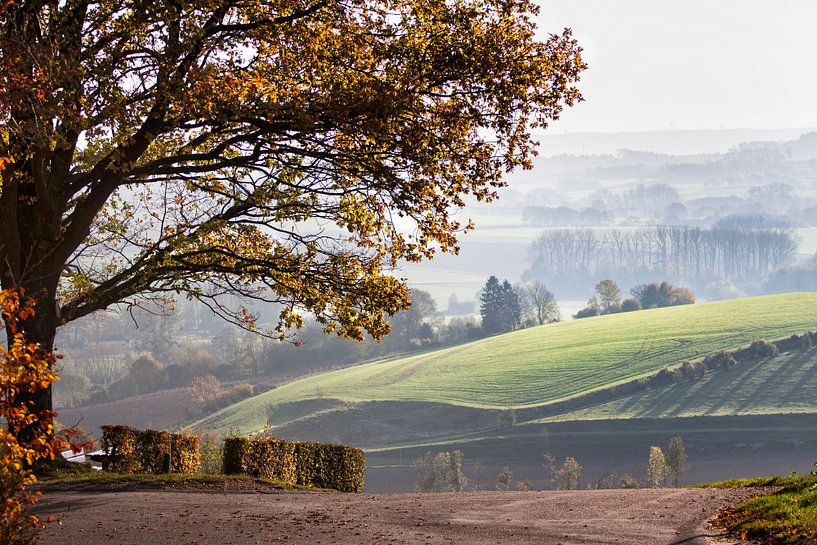 Heuvellandschap in de herfst van peter reinders