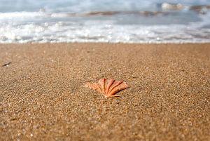 Shell in het zand van