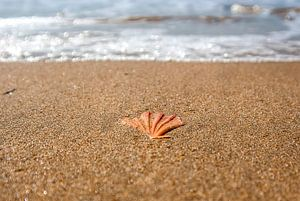 Shell in het zand