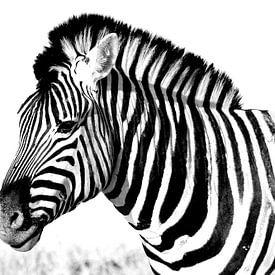 zebra van Henk Langerak