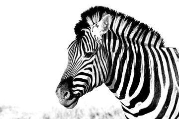zebra von Henk Langerak