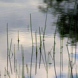 Rietstengels en reflectie van wolken in het water van Kristof Lauwers