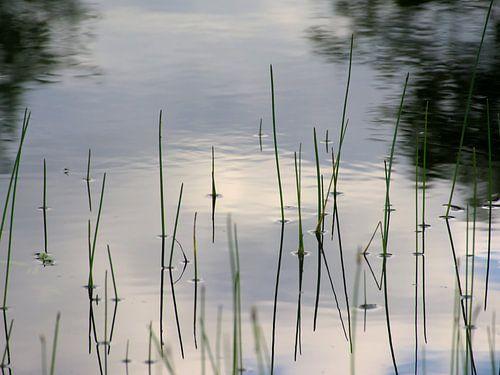 Rietstengels en reflectie van wolken in het water