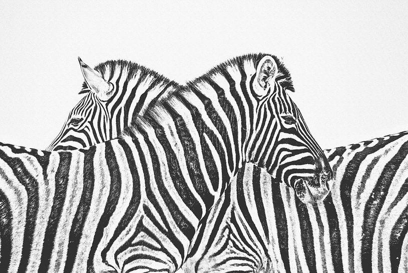 Zebra van Felix Brönnimann