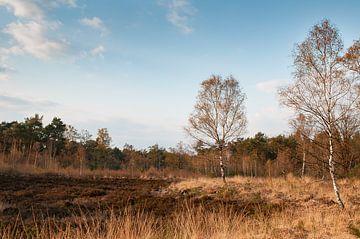 Landschaft Ede von Nancy van Verseveld