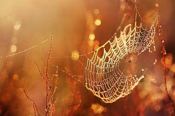 Spinnennetz im Morgenlicht von Maayke Klaver