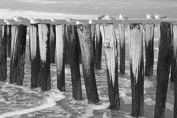 Palen met meeuwen  in zee sur Annelies van der Vliet