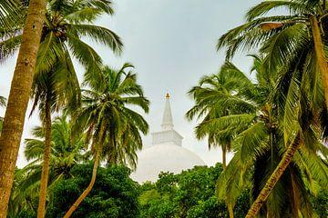 Doorkijkje palmbomen naar stoepa in Sri Lanka