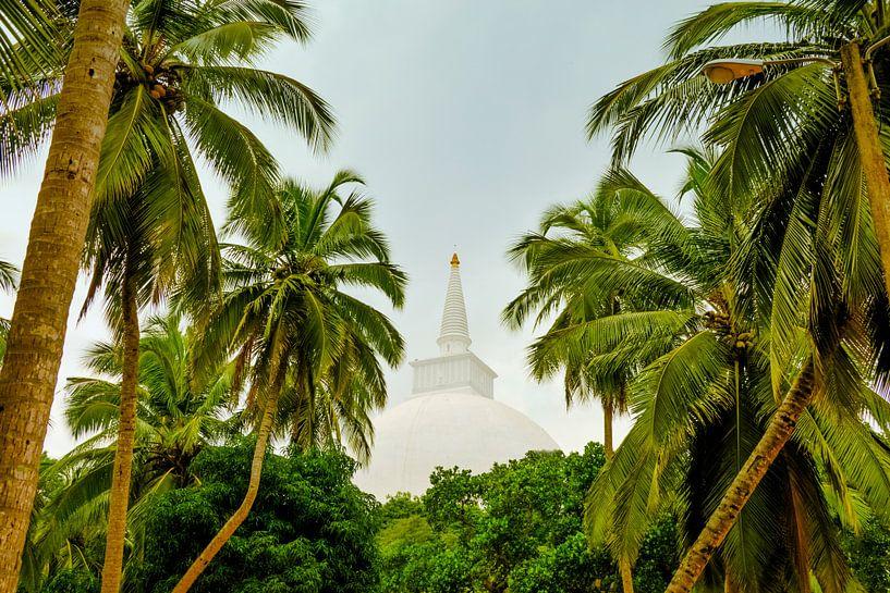 Blick durch Palmen auf eine Stupa in Sri Lanka von Jille Zuidema