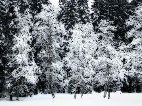 Sneeuwbomen