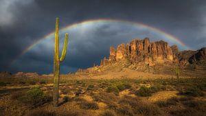 Regenboog over een saguaro cactus