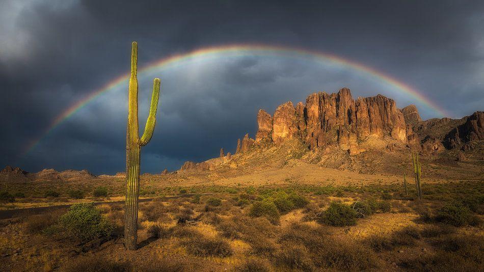 Regenboog over een saguaro cactus van Edwin Mooijaart