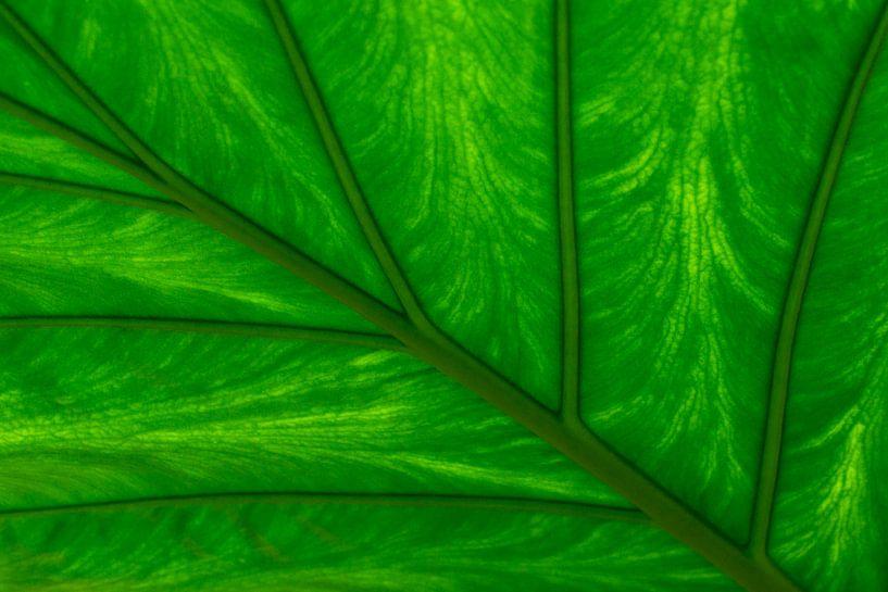 Leaf van Greetje van Son