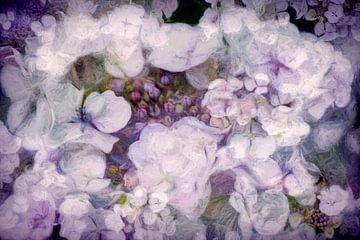 Hortensia bloeit weer weelderig van Francis Dost